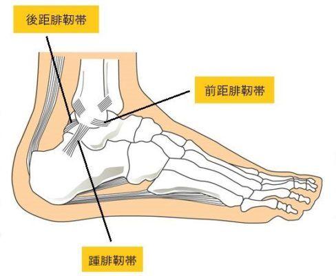 足関節靭帯